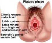 Does Clitoris Size Matter